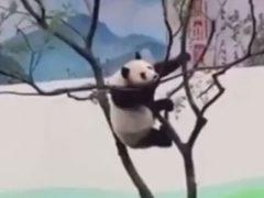 Игры на дереве не довели панду до добра