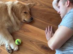 Хозяин и его собака показали, что такое ленивая игра в мяч