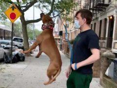 Прыгучий пёс понял, что любимые игрушки растут на деревьях
