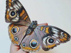Бабочки и жуки, кажущиеся живыми, на самом деле вырезаны из бумаги