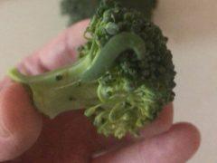 Покупатель, нашедший гусениц в брокколи, стал их выращивать