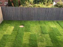 Подросший газон удивил домовладелицу своим странным прямоугольным стилем