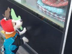 Пёс точно знает, что он хочет купить в зоомагазине