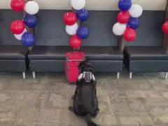 Перед выходом на пенсию служебный пёс получил целый дождь из мячей