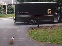 Корги решил прокатиться на грузовике курьера