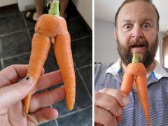 Супруги не удержались от хохота, получив слишком анатомическую морковку