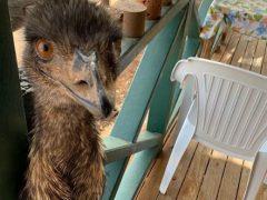 Птицам, которые плохо себя ведут, запретили заходить в паб