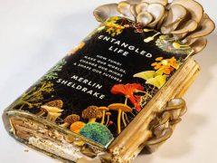 Грибы, съевшие книгу о них, сами попали на стол к автору книги