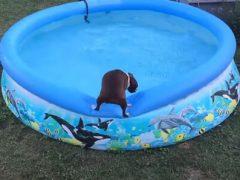 Нерешительный пёс так и не понял, хочется ли ему купаться