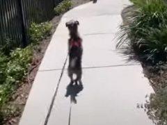При виде любимого парка собака готова встать на задние лапы