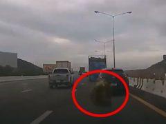 Фрукты, выпавшие из грузовика, напугали автомобилистку