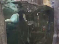 Чтобы набрать много лайков, чудак пришёл в магазин и искупался в аквариуме