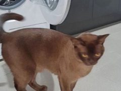 Кот, задремавший в стиральной машине, чудом выжил во время стирки