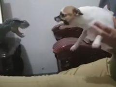 Собаки по-разному отреагировали на нападение игрушечного динозавра