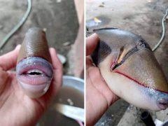Людей удивила и насмешила рыба с человеческими губами