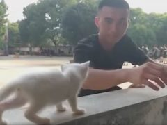 Добрые военные не бросили в беде котёнка, пострадавшего от наводнения