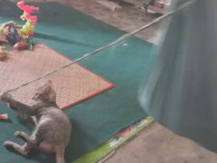Из кошки, раскачивающей гамак, получилась неплохая нянька
