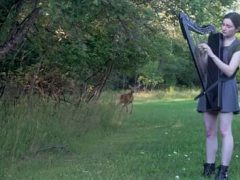 Дикого оленя привлекли звуки арфы