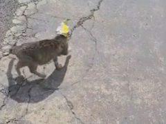 Бродячая беременная кошка нацепила себе на голову пакет