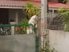 Ворота не способны остановить собаку, решившую поиграть с друзьями