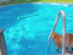 Пёс убедился, что плавать с игрушкой гораздо удобнее