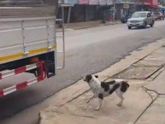 Бездомная собака каждый день катается на школьном автобусе