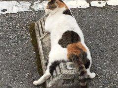 Парковочные барьеры становятся подушками для кошек