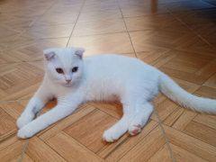 В результате лечения куркумой кошка превратилась в Пикачу
