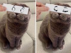 Хозяин «дарит» любимым кошкам уморительные выражения лица