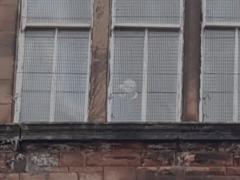 Привидения, живущие в старой школе, выглянули из окна