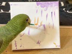 Хозяйка учит своего талантливого попугая множеству интересных трюков