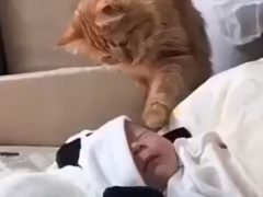 Впервые увидев маленького ребёнка, кошка крайне удивилась