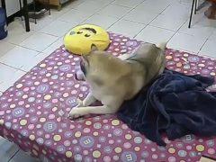 Игрушка показалась собаке куда более интересной, чем землетрясение
