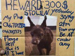 Бездомный ищет свою собаку, полагая, что животное украли