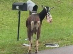 В краже почты из ящика далеко не всегда виноваты люди