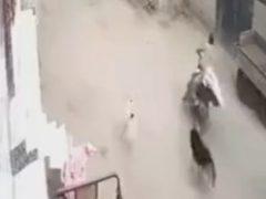 Спасаясь от собак, незадачливый мужчина ещё и врезался в стену