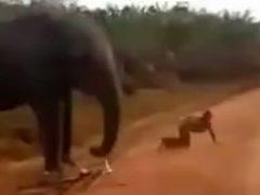 Слон напал на мужчину и отобрал у него велосипед