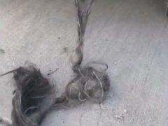 В выхлопной трубе нашлась целая верёвка из отвратительных «волос»