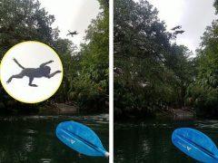 Обезьяны показали туристам, как они умеют нырять