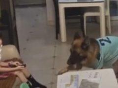 Умная собака напоминает хозяйке, когда стоит приступить к домашнему заданию