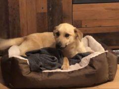 Бездомный пёс впервые в жизни получил возможность поспать в лежанке
