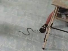 Змеи, стремящиеся к знаниям, устроили гнездо в учительском столе
