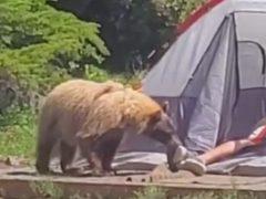 Незнакомец в палатке не подозревал, что его ноги кое-кто внимательно исследует