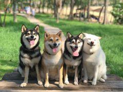 Собака прославилась благодаря таланту портить групповые фотографии