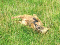 Повалявшись в траве, собака приобрела эффектный зелёный окрас