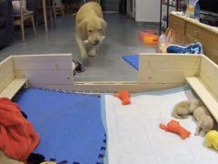 Чтобы щенки перестали плакать, четвероногая мамаша задарила их игрушками