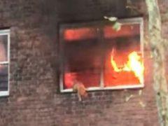 Спасаясь от пожара, кошка выпрыгнула из окна второго этажа