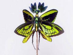 Мёртвые насекомые получают вторую странную жизнь в качестве фей