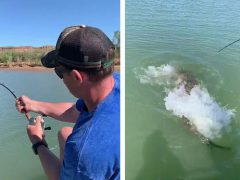 Вместо очередной рыбины мужчина поймал крокодила