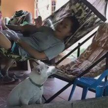 Странная собака не сдвинется с места, даже если её побьют гамаком